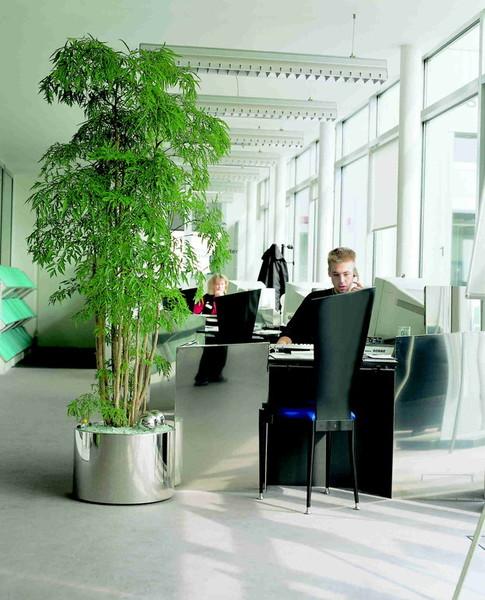 Blumen menzel produktion von zierpflanzen floristik for Blumen hydrokultur